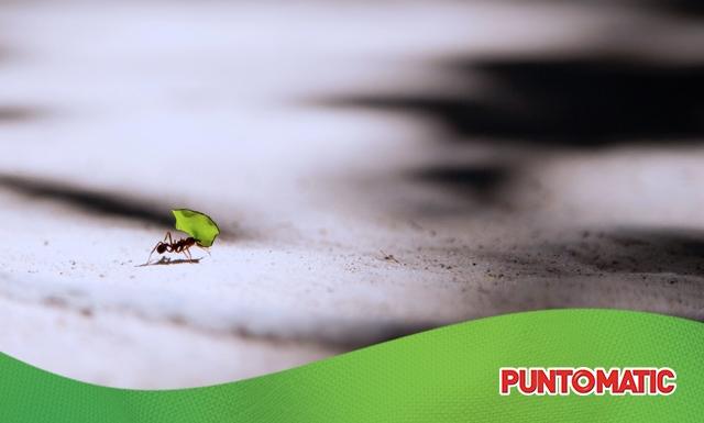 Cómo evitar que las hormigas entren en casa