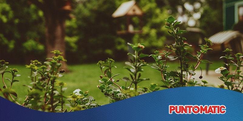 Qué plantas elegir para tu terraza o balcón
