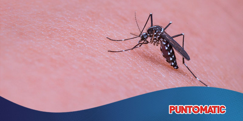 ¿Qué antimosquitos utilizar en casa?